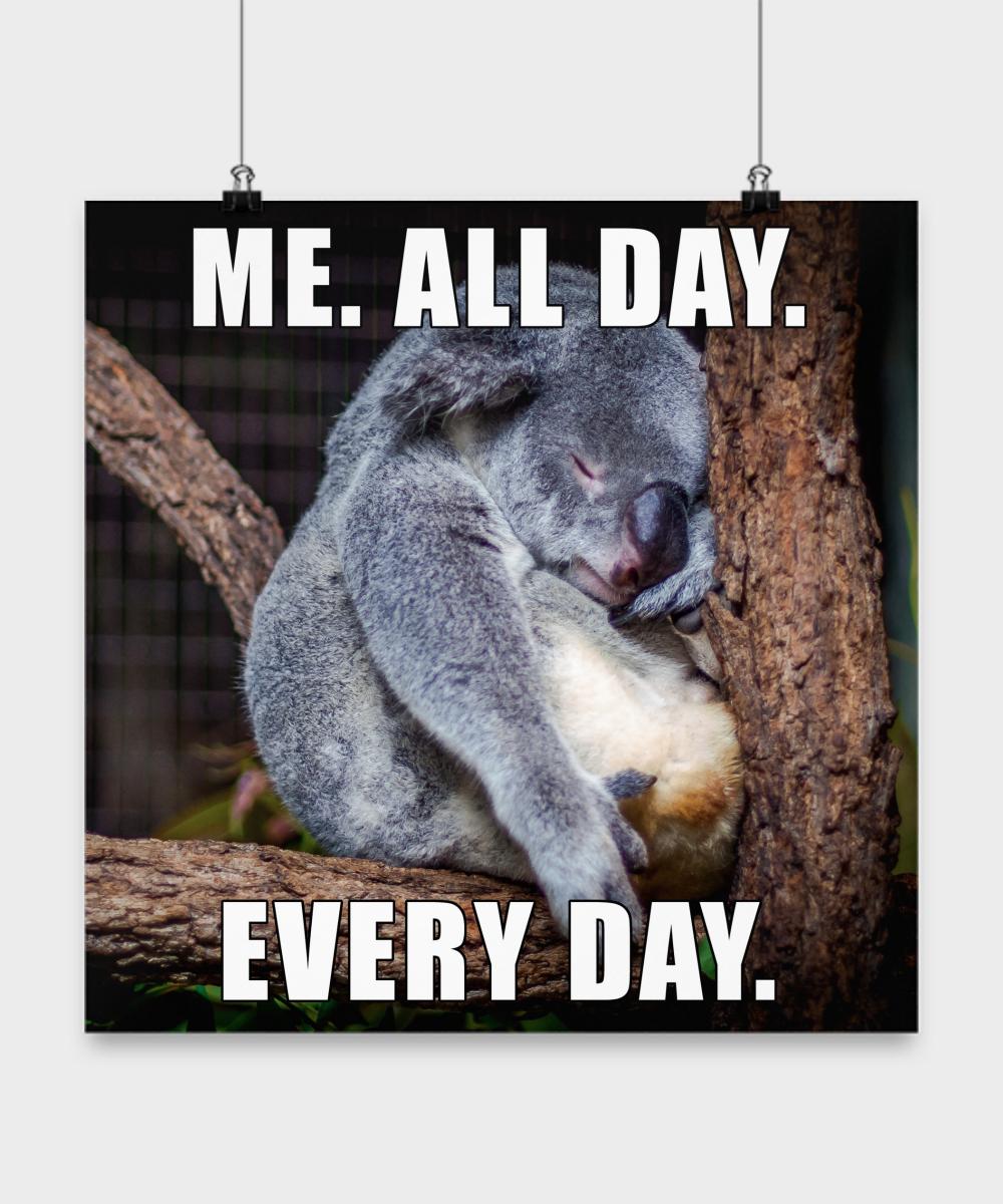 Funny Meme Everyday : Funny koala bear meme poster me all day every
